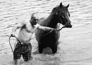 水場にいる馬のイメージ